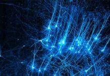 Распределенное обучение нейронных сетей с MXNet.