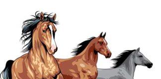 Задача- определить самую быструю лошадь